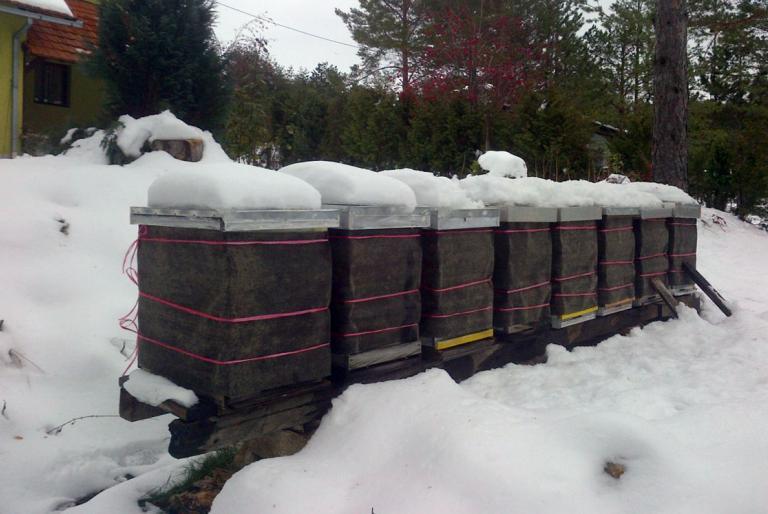 košnice zima